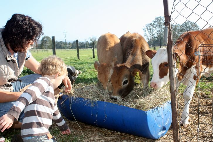 Tommerup's Dairy Farm is a 6th generation working farm where the farm gates have been opened to visitors who want to experience a truly unique, authentic w