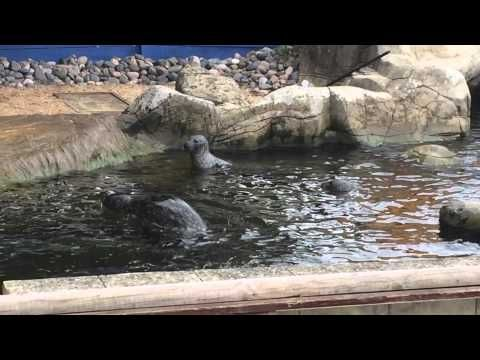 Feeding The Seals At Weymouth Sealife Centre