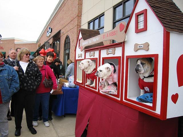HeaventSent Bulldog Rescue kissing booth, via Flickr