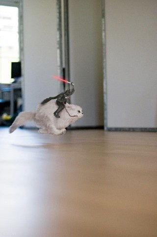 new goal: to make ordinary housecat awesome: Funny Pets, Cats, Cat Posts, Animals, Cant Stop Laughing, Star Wars, Laugh Worthy, Cat Lovers
