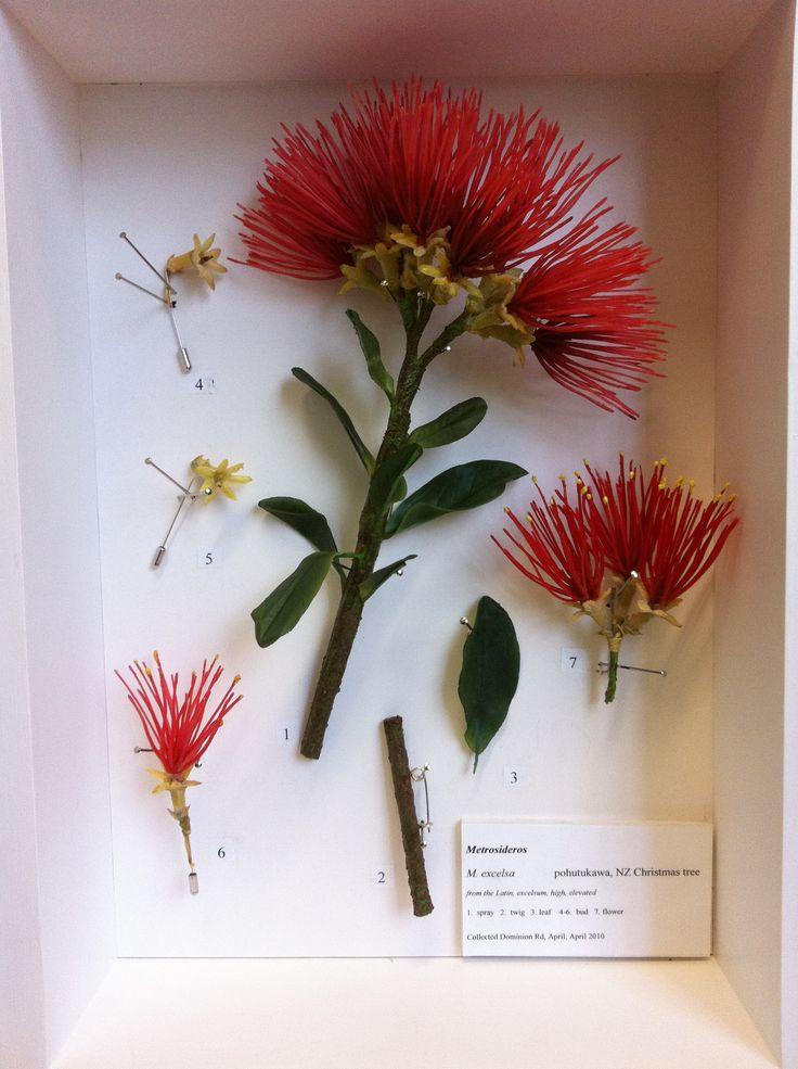 Pohutukawa flower. img_1775.jpg (1936×2592)