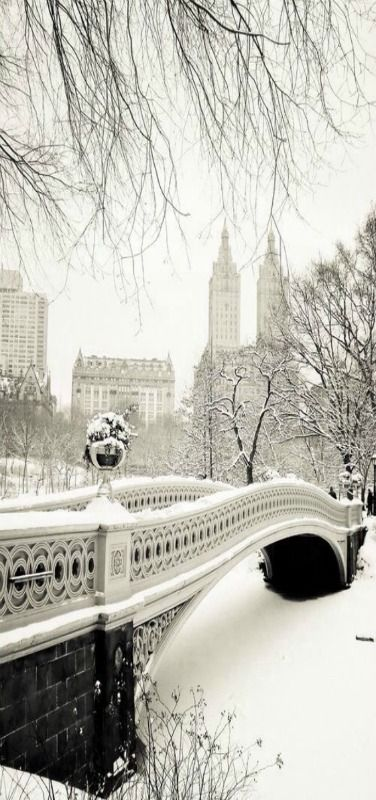 Central Park on a snowy day, New York City