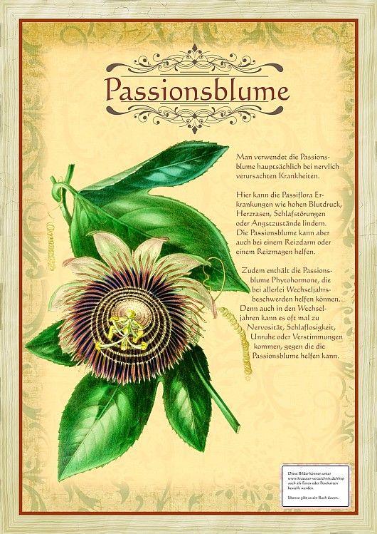 Passionsblume                                                                                                                                                                                 Mehr