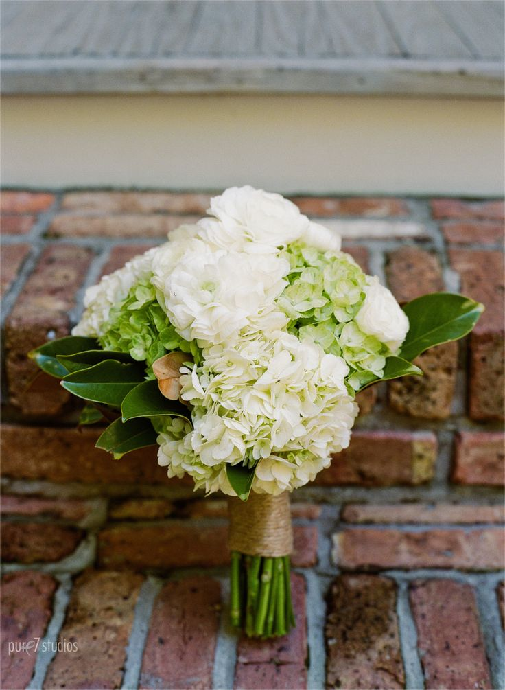 The bridal bouquet will be a clutch of cream and green hydrangeas with white ranunculus, green seeded eucalyptus, and magnolia foliage wrapped in ivory ribbon.