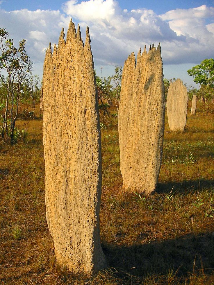 Magnetic termite mounds, Litchfield National Park. They call them magnetic termites because the termites build their mounds with the thin edges facing east and west. These towers act as cooling towers for the colony underground.