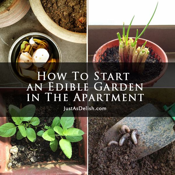 To ] Great To Own A Ray Ban Sunglasses As Summer Gift.How To Start An Edible  Garden In The Apartment