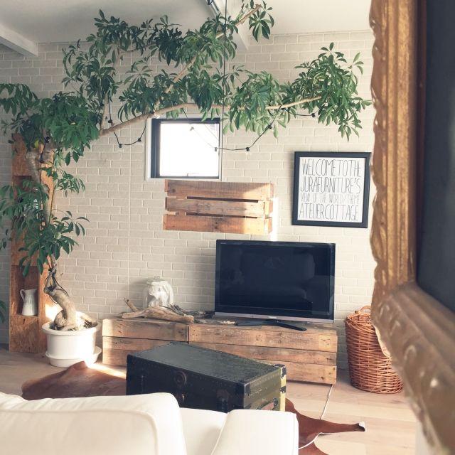 rieさんの、インスタ→hm_rie,テレビボード,植物,観葉植物,トランク,レンガ壁,古材,海外インテリアに憧れる,電球,流木,IKEA,照明,リビング,のお部屋写真