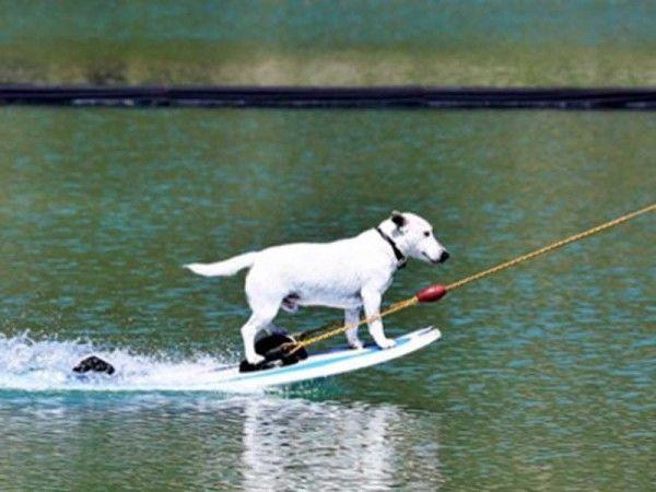 Antalya'lı köpek Neo'nun su kayağı şöhreti Avrupa'ya yayıldı Detaylar ajanimo.com'da.. #ajanimo #ajanbrian #köpek #dog #hayvan #animal