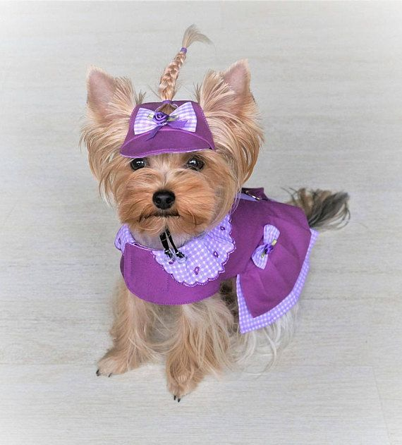 Dog dress XS, Girl dog dress, Small dog clothing ,Yorkie ...
