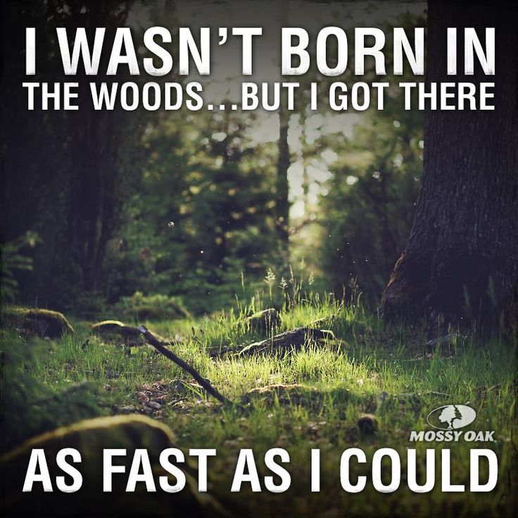 Camping In The Woods Quotes. QuotesGram