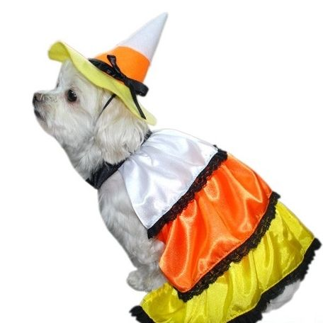 Dog Costume - Kandy Korn dress and matching hat,