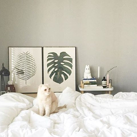 This picture  loving the cute cat - and of course our Plant print at the back  Thanks for sharing @warm_grace  Find both prints at  Bygarmi.com