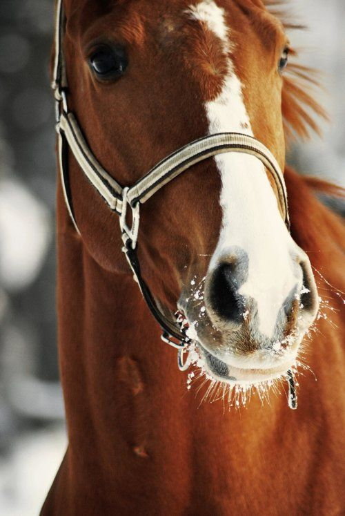 Frosty whiskers... Just one of those little horse thangs.