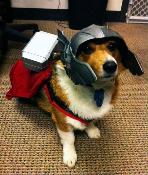 Meet Thorgi [Pic]