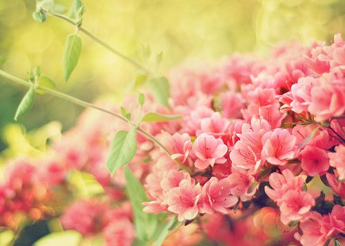 Pink Flower, Secret Gardens, Bi Erachel11, Erachel11 Wwwflickrcom, Painting Colors, Spring, Bloom Beautifulgarden, Pretty Flower, Colors Inspiration