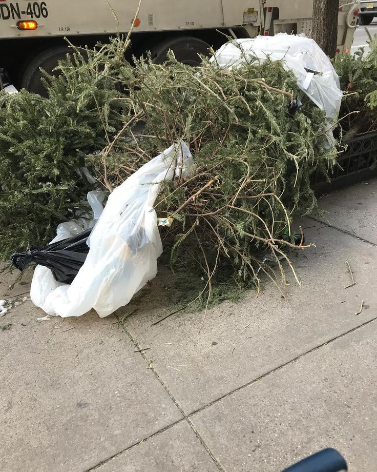 RANT: I walked the streets of three boroughs and saw Christmas trees out to dispose. All streets had at least 10 trees. If you bought a Christmas tree real or fake they are really bad for our world. People say to me but they are grown to get cut down duh. Its a fake tree it wont harm anyone. Why grow a tree to cut it down? How is there any logic to that? Imagine actually planting trees and keeping them in the ground? Some of these disposed trees dont make it to a compost or a recycling…