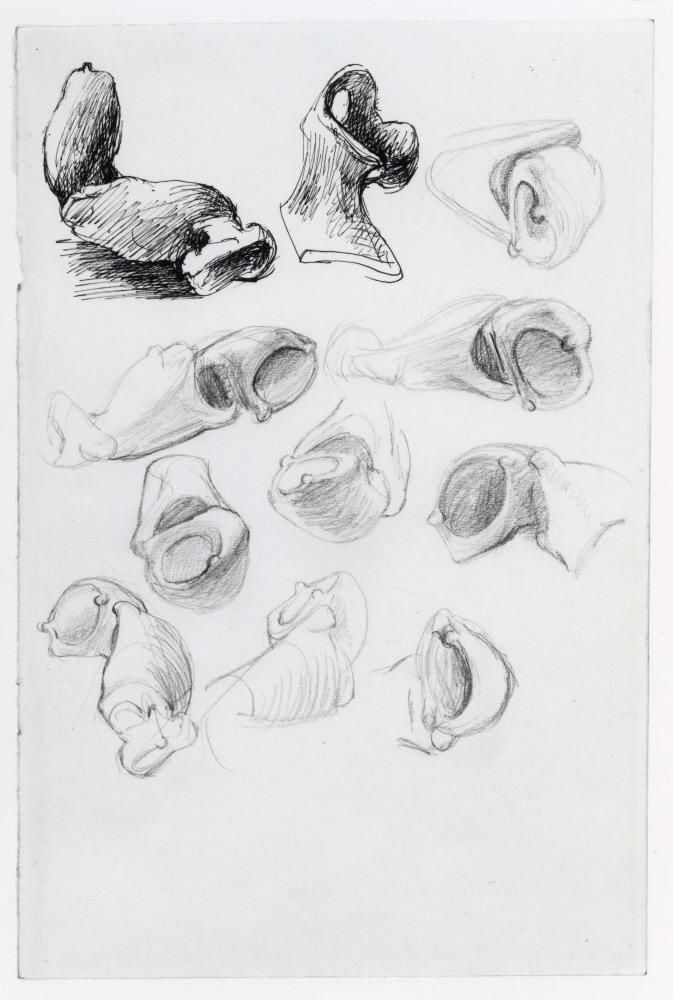 Studies of Lobster Claws – Results – Search Objects – Henry Moore Foundation