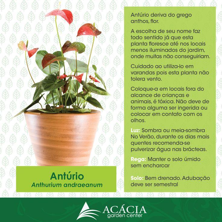 40 best images about plantas como cuidar on pinterest for Plantas de interior anturio