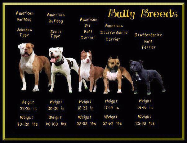 Different types of staffordshire terrier