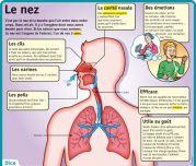 Le nez - Le Petit Quotidien, le seul site d'information quotidienne pour les 6-10 ans !