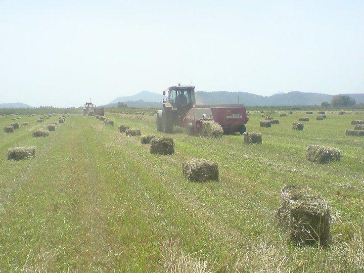 Tractors & Farm