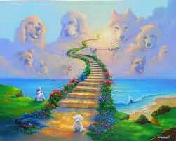 All dogs go to Heaven... Looks like Yuki waiting for me
