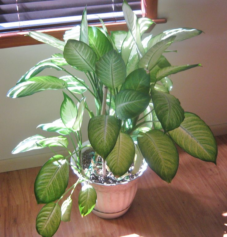highly toxic house plant