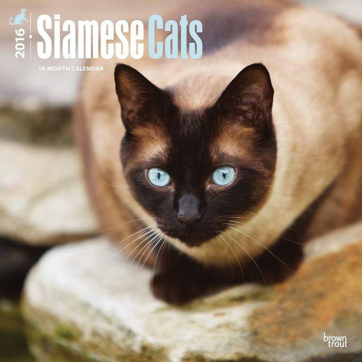 siamese cats calendar 2016