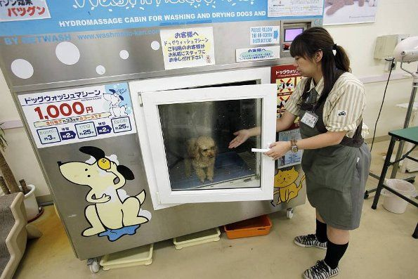 Japanese Dog washing machine. This actually doesn't look dangerous, haha click the link