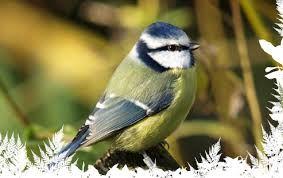 cameras.com - We use a specific type of infrared light designed to give optimum light levels inside our nest boxes. #Bird_Box_Camera #Bird-Feeder_Cameras