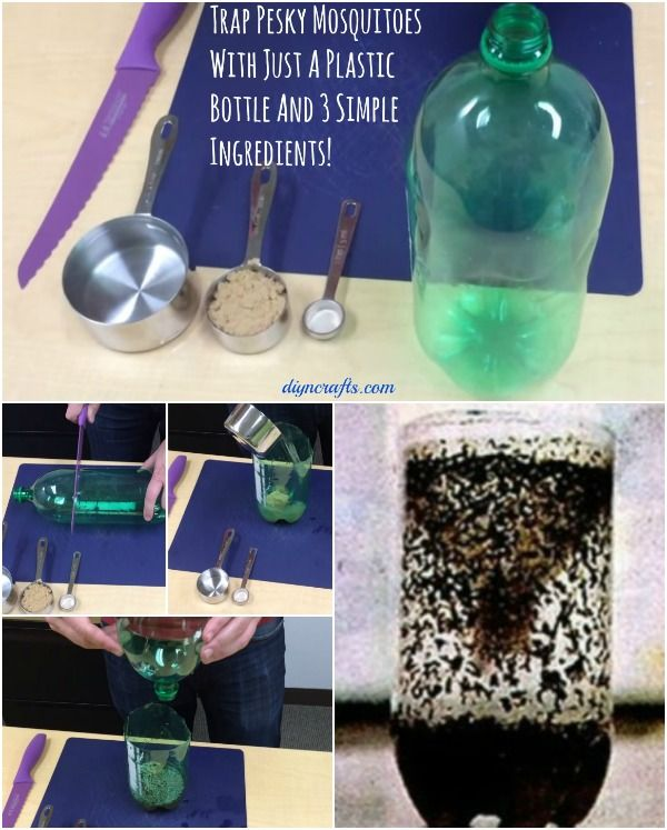 Bottle trap for insects