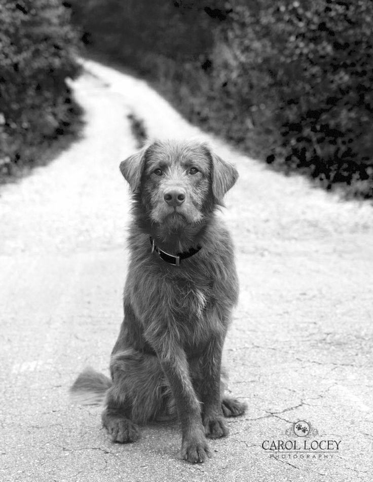 Top Ten – Black and White » Photography Marketing and Business Tips for Pet Photographers – Hair of the Dog