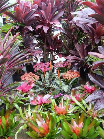 Great site for tropical plantings