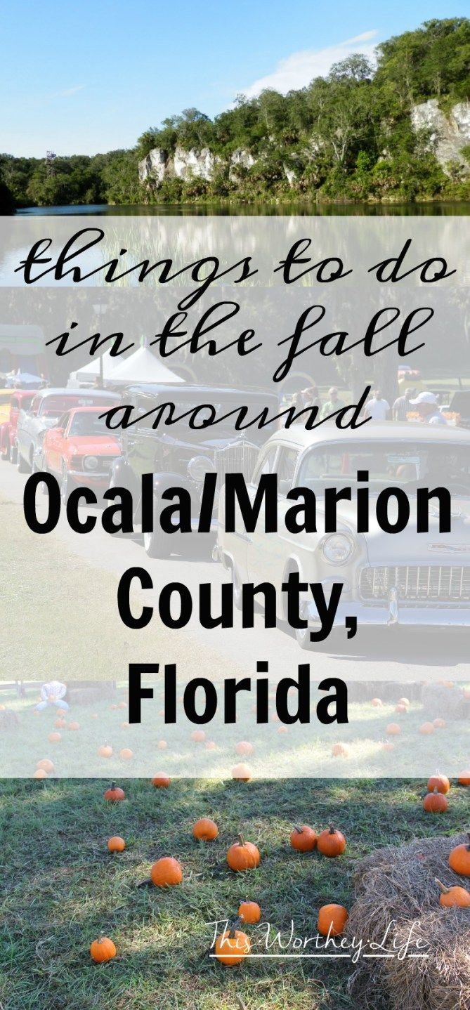Find a lot of fun and unique things to do in Ocala/Marion County, Florida- Fall Activities In Ocala/Marion County, Florida [ad]