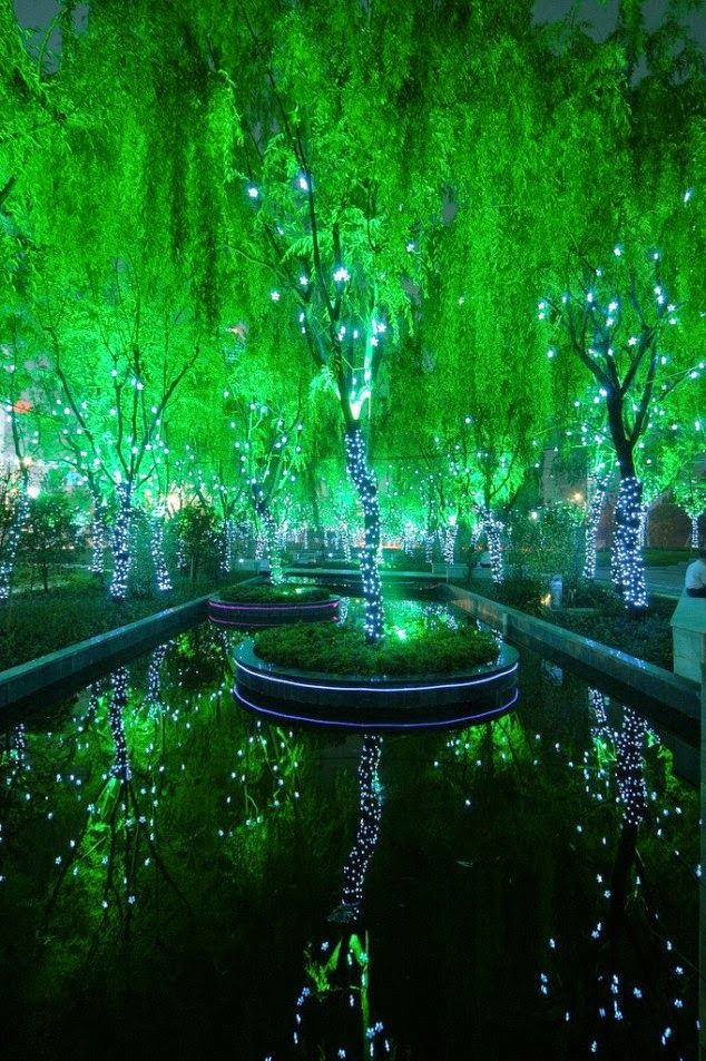 Amazing Magic Forest in Shanghai, China.