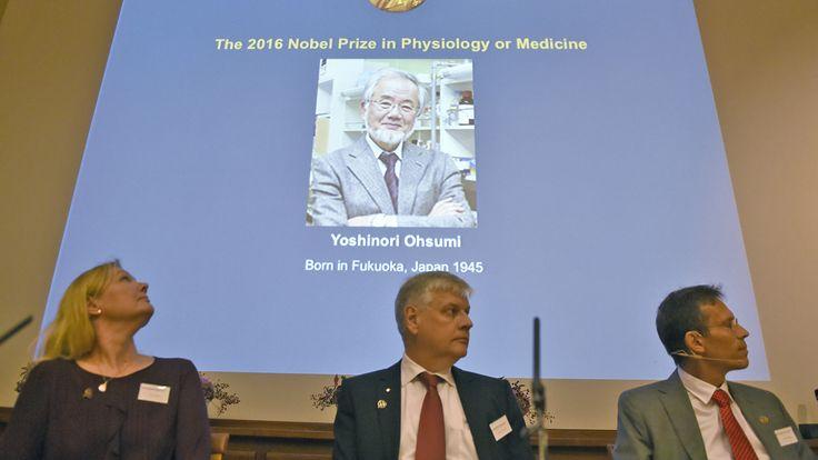 El médico japonés fue galardonado por la Academia sueca, que reconoció su trabajo para degradar y reciclar componentes celulares
