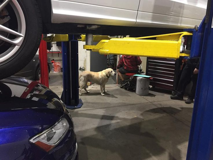 Bring your dog to work day! #friday #denver #mechanics