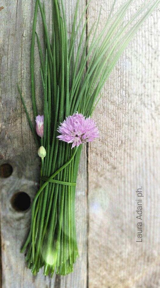 Erba cipollina by Laura Adani photography (www.lauraadani.com)