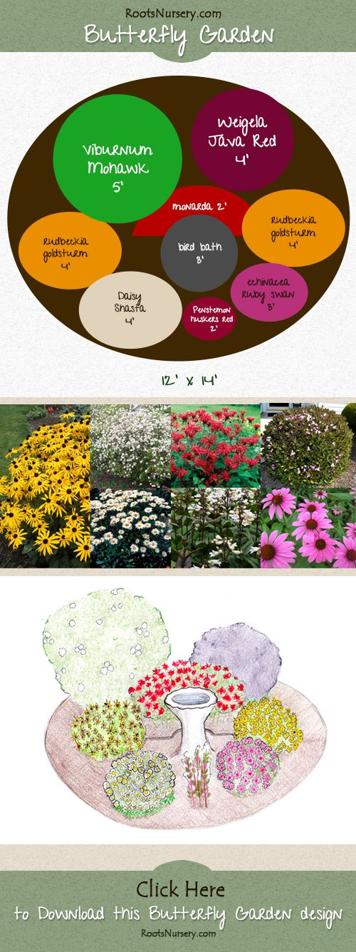Butterfly Garden. Download the full version with plant list. http://rootsnursery.com/butterfly-bird-garden-design