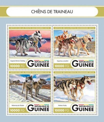 GU16419a Sledge dogs (Seppala Siberian Sleddog; Canadian Eskimo Dog; Alaskan Malamute; Alaskan huskies)