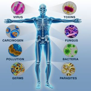 immune system and health care act Find science-based health information on symptoms, diagnosis, treatments, research, clinical trials and more from nih, the nation's medical research agency.