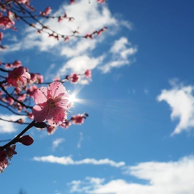 """""""Spring is almost here! Can't wait for everything to be in bloom, short sleeves…"""