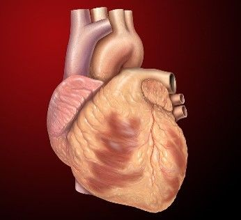 Resource for teaching about treatments for people with heart problems. This is part of the new Science GCSE course.
