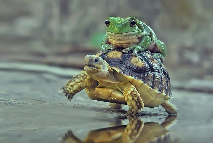 When whimsical wildlife photography isn't what it seems | Cute animal videos, Funny animal photos, Animal photography