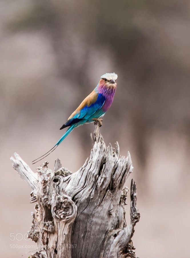 1020 Best If I Was A Bird Images On