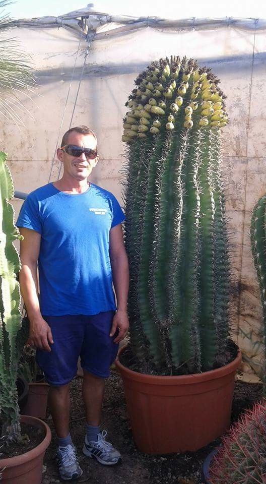 Wow, what a big cactus for a container plant. Well done dude!