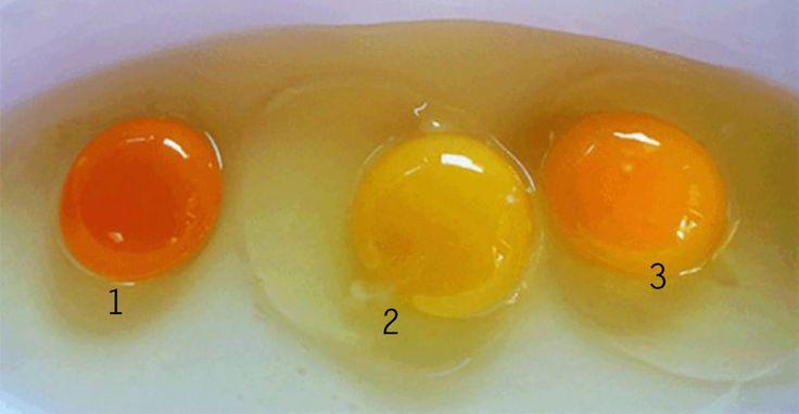 Veel eieren die wij eten komen van ongezonde kippen. Wist jij al dat de kleur van het eigeel in jouw eitje heel veel zegt over de gezondheid van de kip die het ei heeft gelegd? Wij wisten dat niet namelijk! Recent onderzoek toont aan dat je heel makkelijk aan de kleur van het eigeel kunt zien welke