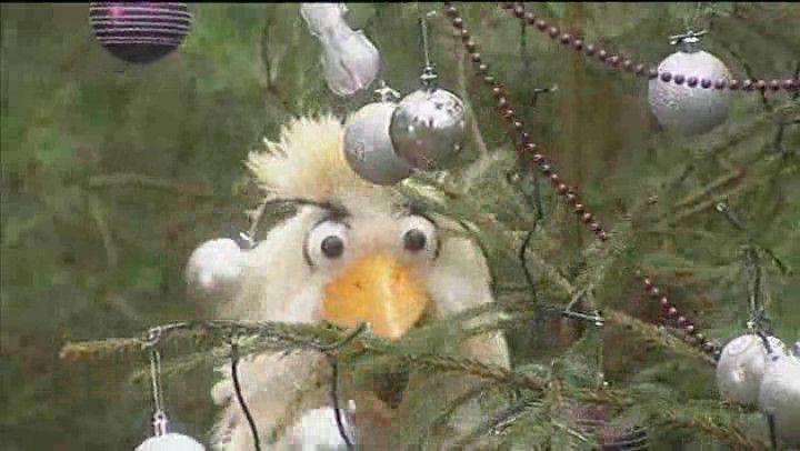 Schooltv: O dennenboom! - Wat zijn je takken wonderschoon! - Raaf zingt het kerstliedje: O dennenboom. Maar wist je dat een kerstboom helemaal geen denneboom is maar een spar? liedje Kerst feest boom