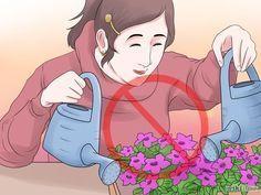 Grow Petunias Step 18.jpg                                                                                                                                                     Mais