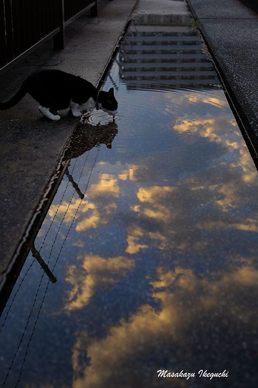 路上のルール: 空色の雨上がり Masagazu Ikeguchi 空を飲んでいるみたいな 舌の波紋